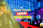 Is Hemp Flower Legal in New York? Material Previously Confiscated by NYPD…