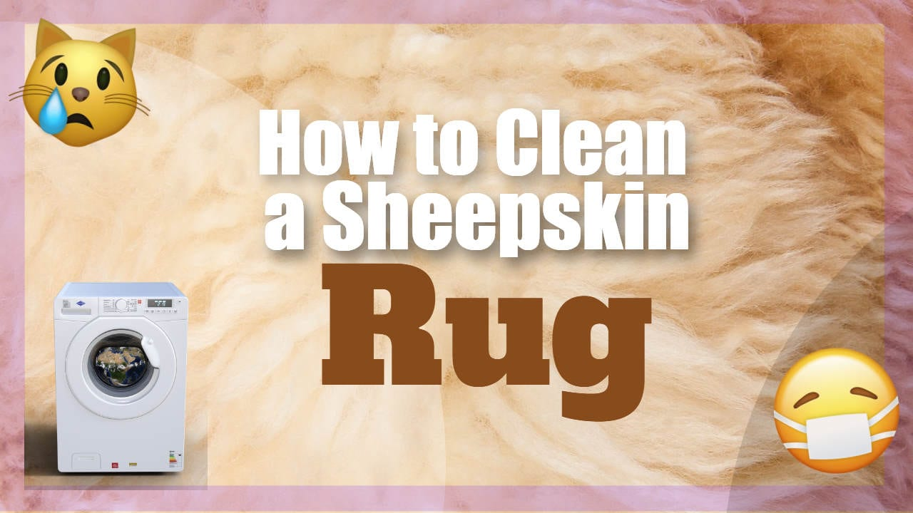 "Image text: ""How to Clean a Sheepskin Rug""."