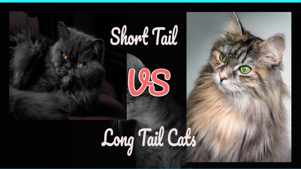 Cat Tail Type: Long or Short Tails