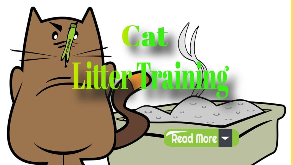Cat Litter Training