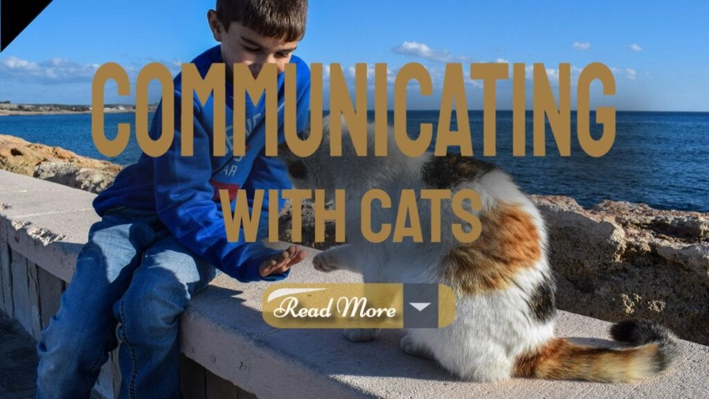 Body Language Communicating With Your Cats
