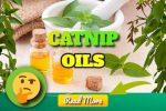 Catnip Essential Oil Health Benefits