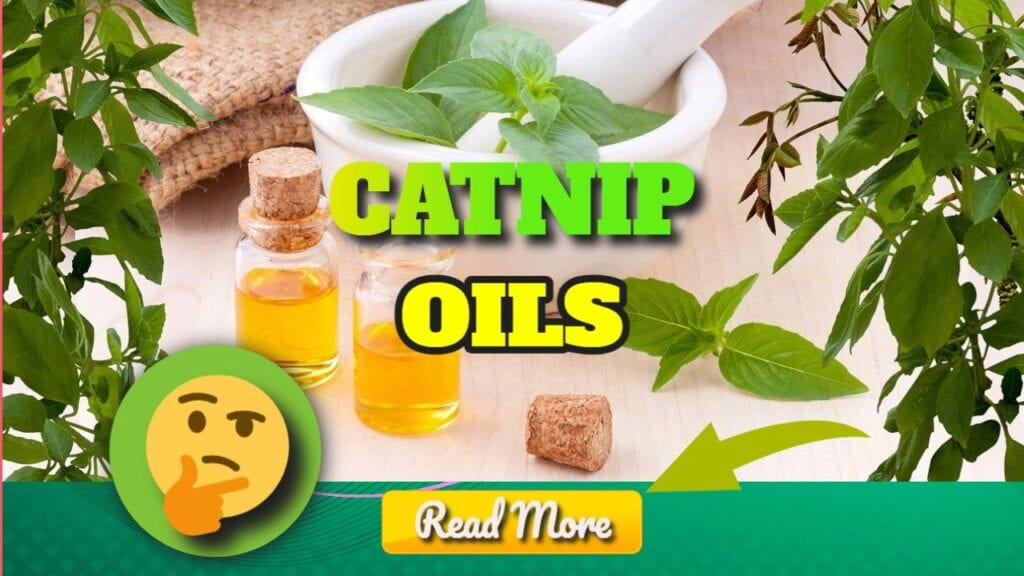 Catnip Essential Oil Health Benefits