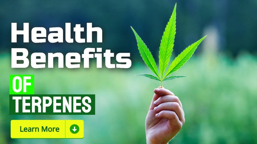 Health Benefits of Terpenes
