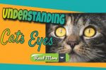 Why Are My Cat's Eyes Dilated All The Time?