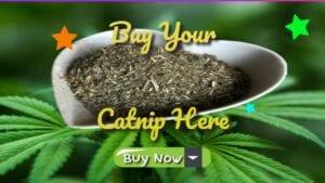 buy your catnip here buy now fresh stock