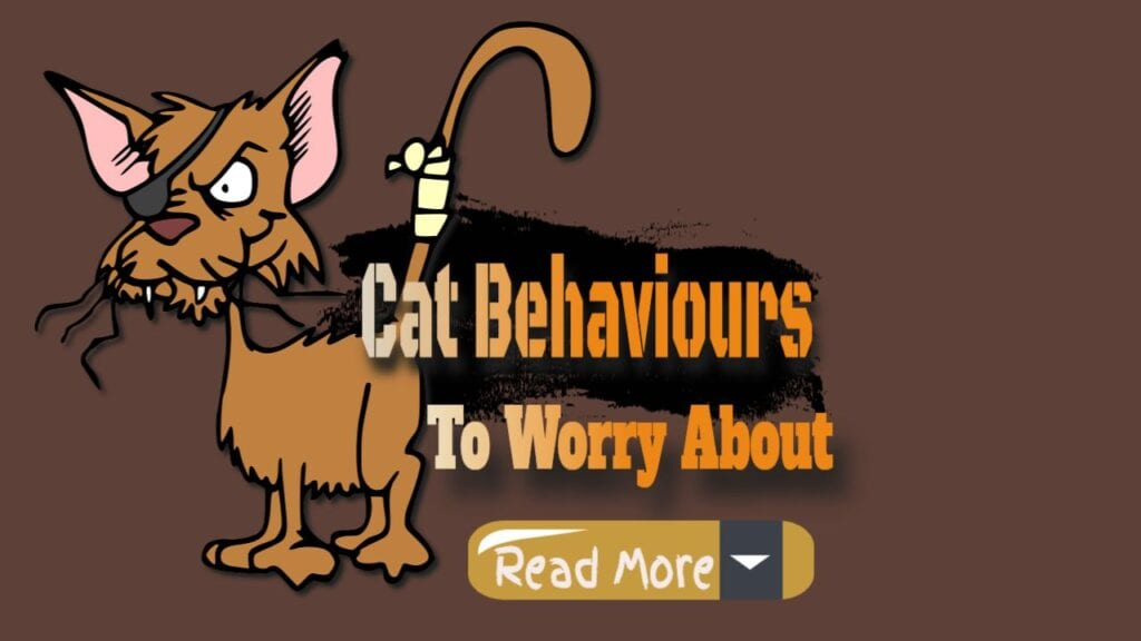 Cat Behavior – Worry About And Solve
