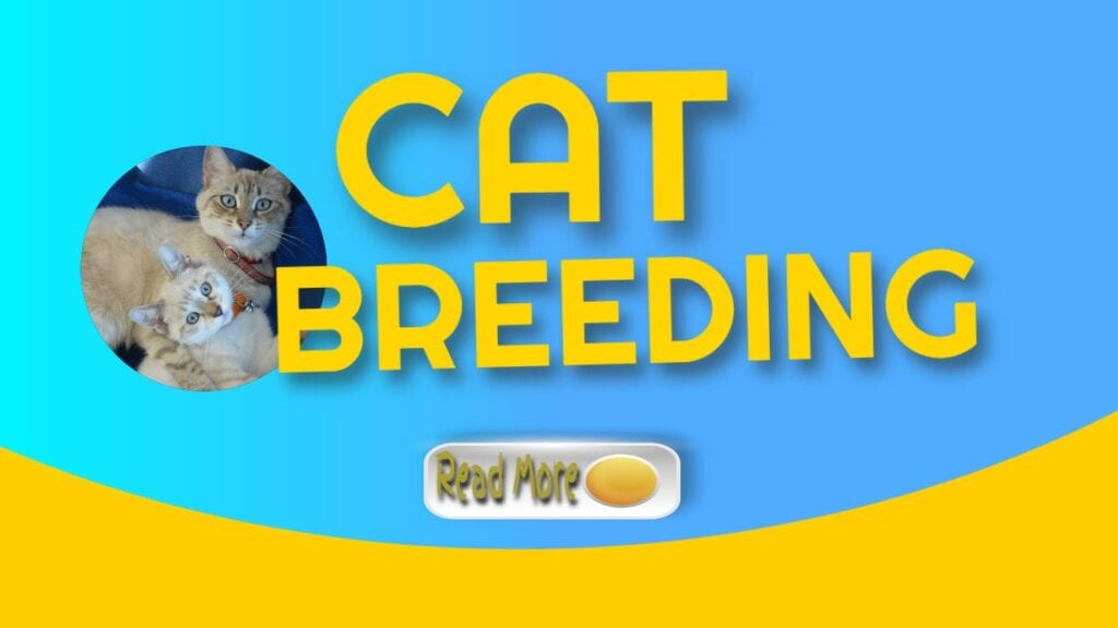 Breeding Cats and Raising Kittens