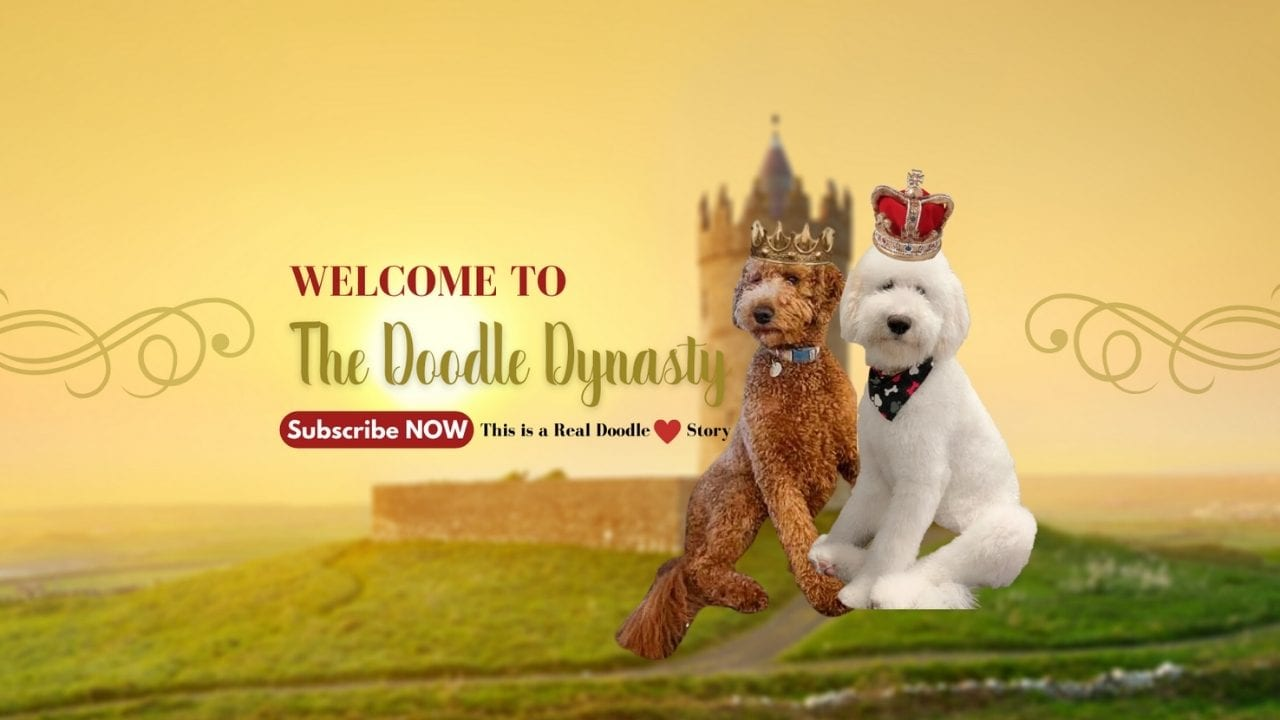goldendoodle dynasty