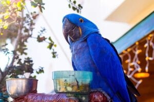 parrot-with blue feathers