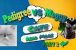 Cat breed Information – Pedigree VS Maggie Part 2