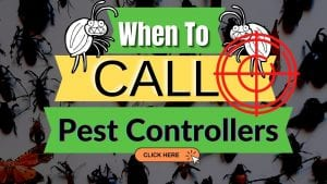 When To Call A Pest Control Company