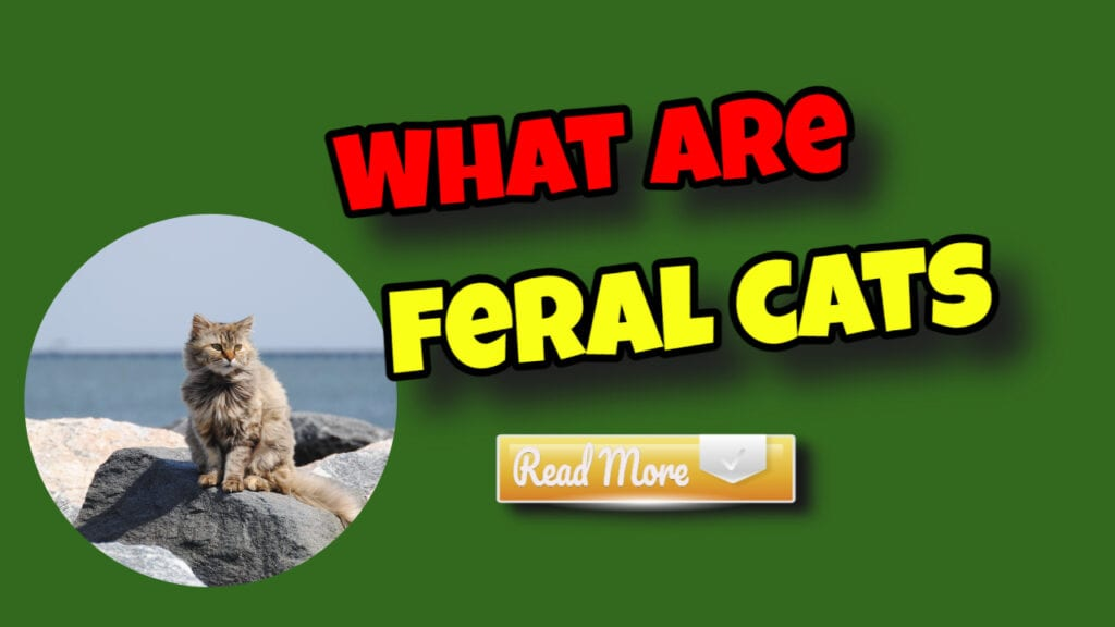 Feral and Stray Cats—An Important Difference