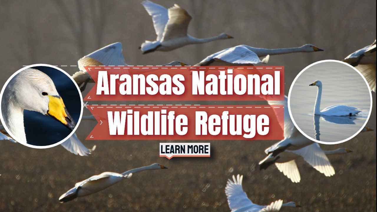 Aransas Wildlife Refuge – Winter Home of the Whooping Crane