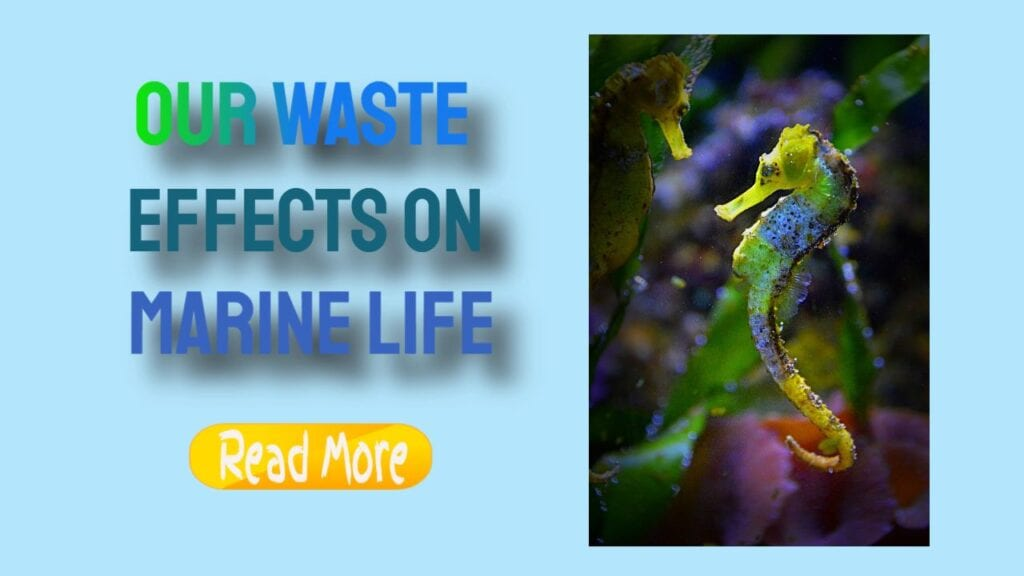 Effect Of Marine Life from Our Waste