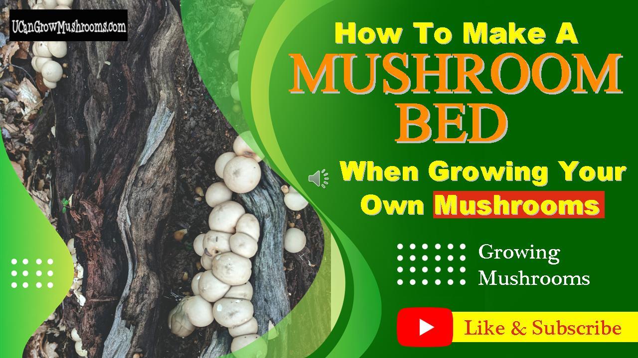 mushroom bed diagram